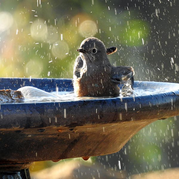 Bird baths need to be shallow and ideally have somewhere safe for the birds to stand, e.g. rocks or stones
