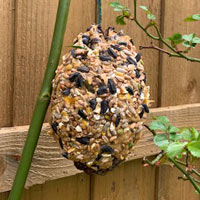Pine cone covered in peanut butter or lard plus seeds