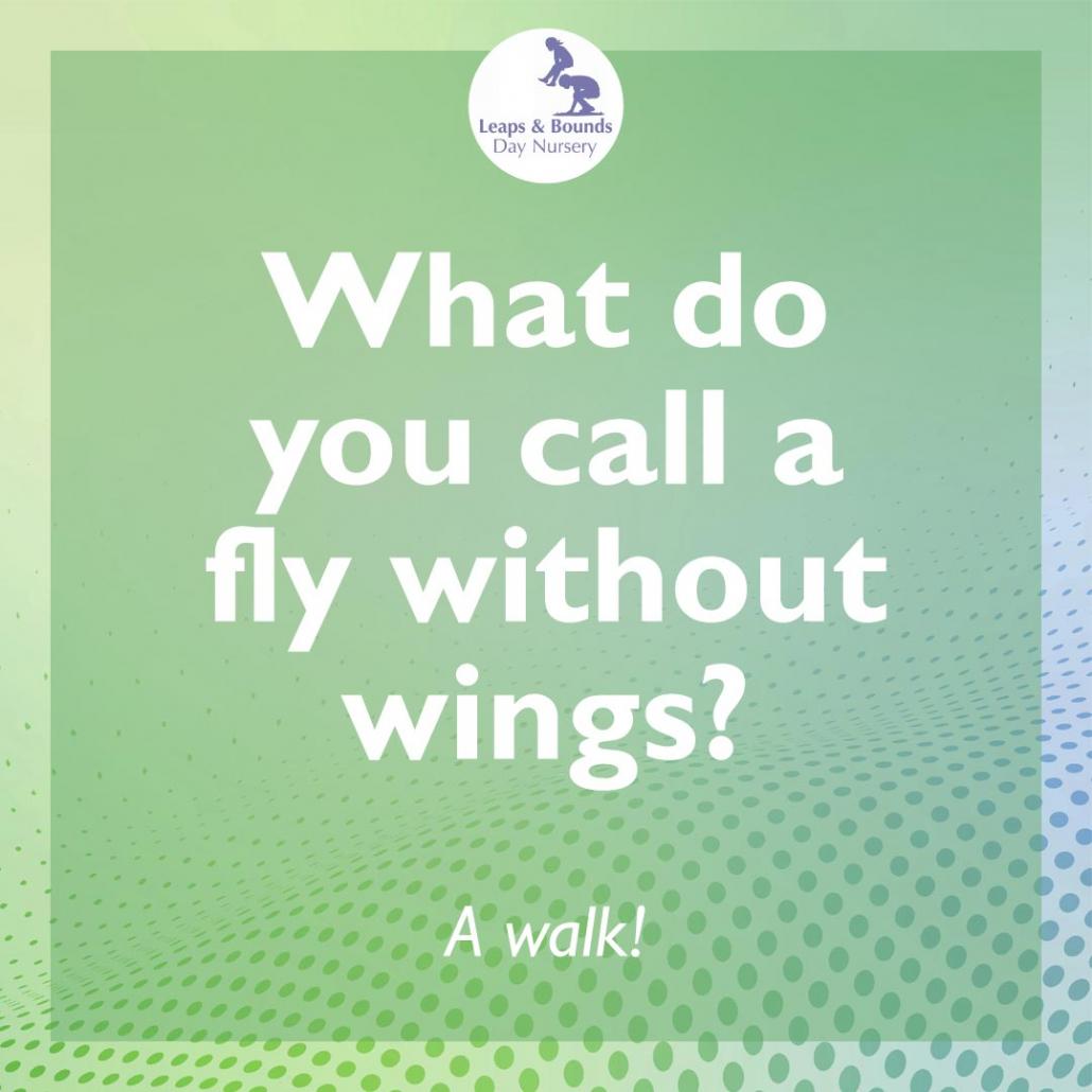 Fly joke for preschoolers
